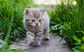 cute cats and kittens wallpapers. Delighful Kittens And Cute Cats Kittens Wallpapers
