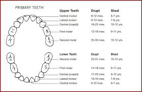 Teething Chart Babies Teething Chart A Guide To When Teeth May Appear