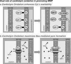 mitochondrial glutathione a key