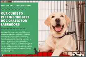 Midwest Dog Crate Size Chart 5 Best Labrador Crates Our 2019 Labrador Crate Size Guide