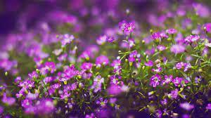 Flowers Desktop Background Hd ...