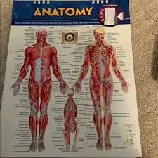 Anatomy Flip Charts Anatomy Flip Chart