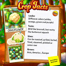 💮 Cauliflowers - as the name suggests,... - Solitaire - Grand Harvest    Facebook