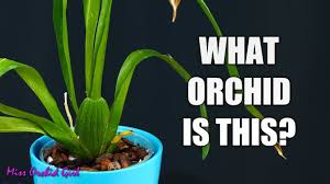 How To Identify Orchids Without Flowers A Simple Guide For Beginners