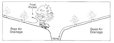 Growing Pecans In North Carolina  NC State Extension PublicationsFruit Tree Nursery North Carolina