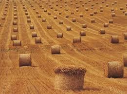 Курсовая Себестоимость продукции растениеводства пути и резервы  Курсовая Себестоимость продукции растениеводства пути и резервы ее снижения на примере СПК Гигант