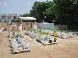 bucket gardening. I Bucket Gardening