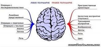 Асимметрия полушарий головного мозга Кинезиолог Таблица Несимметричное распределение ролей между симметричными парными полушариями головного мозга