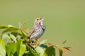 3 Billion Birds More Than A Quarter Of All Birds Have