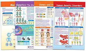 Heredity Chart