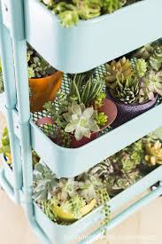 succulents in an ikea cart succulents and sunshine