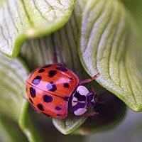 Adopt a <b>ladybug</b>   Symbolic animal adoptions from WWF