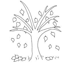 Fall Leaves Coloring Sheets Beech Tree Leaf Page Autumn Pages