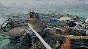 pollution and marine life essay effects of ocean pollution on  pollution and marine life essay