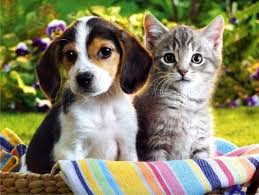 pictures of cute dogs and cats together. Cute Puppy And Kitten Together Picture On Pictures Of Dogs Cats