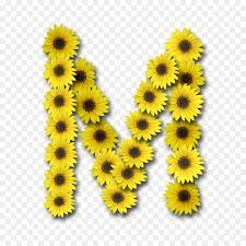 letter case alphabet mon sunflower sunflower