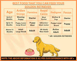 Dog Food Chart By Weight And Age 60 Unique Golden Retriever Puppy Weight Chart Home Furniture