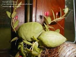 Questa pianta è una delle più diffuse nelle nostre case. Piante Da Appartamento Resistenti Piante Appartamento Piante Appartamento Resistenti