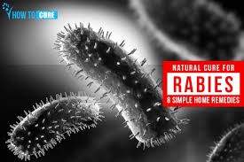 natural cure for rabies simple home remedies rabies cure how to cure rabies in humans naturally