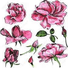 Flowers Of Pink Roses Drawn By Watercolor Isolated Pink Roses