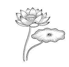 Tranh tô màu hoa sen đẹp