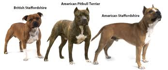 Types Of Pitbulls Chart Types Of Pit Bull Breeds Pets World