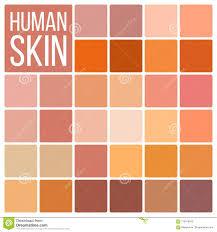 Human Skin Vector Various Body Tones Chart Realistic