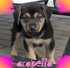 my name is arabella