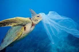 Resultado de imagen de the sea plastics