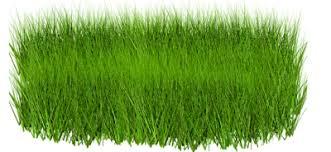grass transparent background. Green Grass Twenty-eight Grass Transparent Background