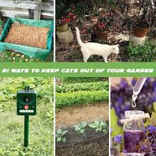 how to keep cats out of garden. Delighful Keep Keep Cats Out Of Garden On How To