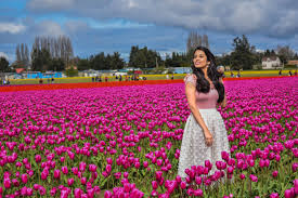 some useful tips for visiting skagit valley tulip festival