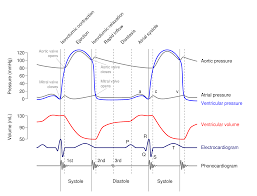 Ecg Chart Labeled Ecg Labeled Diagram 2000px Wiggers Diagram Svg Made By