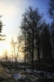 Home Uitstekend Aangenaam Bomen Behang