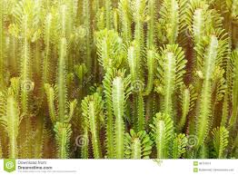 Outdoor backgrounds Nature Cactus Trees Nature Parks Outdoor Backgrounds And Textures In Dreamstimecom Cactus Trees Nature Parks Outdoor Backgrounds And Textures In