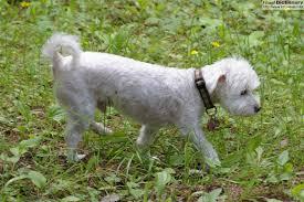 Ποια άλλα είδη σκύλων είχαν οι Αρχαίοι Έλληνες;