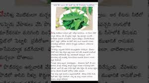uses of neem in telugu  uses of neem in telugu