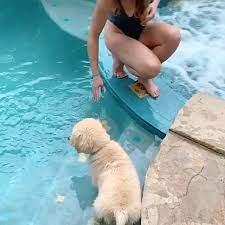 😂😂😂❤️❤️❤️ - Amo y respeto a los animales
