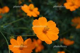 「秋の花 無料写真」の画像検索結果
