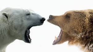 Dakota Grizzly Size Chart Grizzly Bears Behemoths Of The North