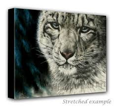 snow leopard wall art canvas art print calm before the storm wildlife and art on snow leopard canvas wall art with snow leopard wall art canvas art print calm before the storm