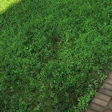 photo of trugreen lawn care danbury ct united states when you pay