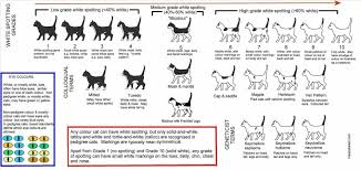 Cat Height Chart How To Identify A Savannah Cat 8 Steps With Pictures