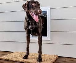 smart dog doors a dream to come true