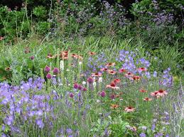Small Picture perennials for cutting Archives Home Flower Garden
