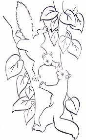 Coloriage Ecureuils