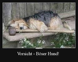 Vorsicht Böser Hund Lustige Bilder Sprüche Witze Echt Lustig