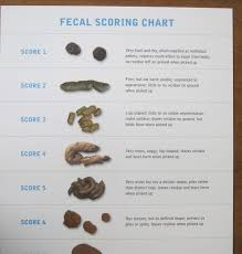 Fecal Scoring Chart Journey To A Dvm Why Everyone Should Go To Vet School