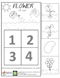 Flower Life Cycle Worksheet For Kids Cycles Plant Preschool