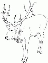 Small Picture Christmas Reindeer Coloring Pages GetColoringPagescom
